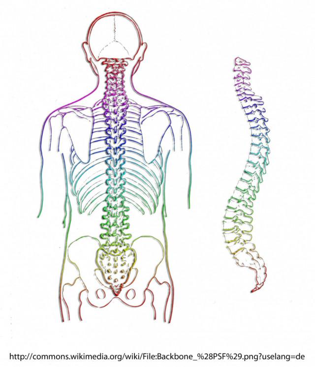 背骨と骨盤